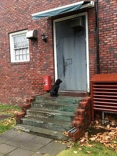 モスは裏口で主人をひたすら待ちます